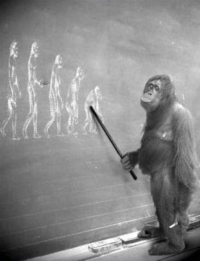 darwinism-or-intelligent-design
